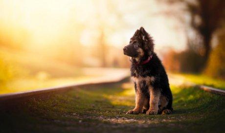 Shooting pour chien à Lyon ou région lyonnaise
