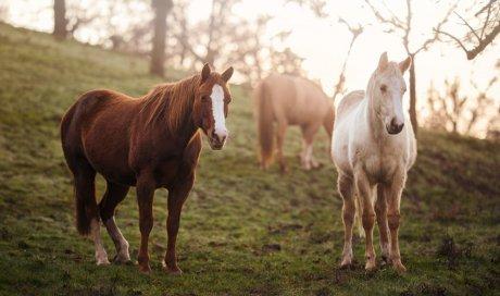 Photographe professionnelle pour shooting cheval à Lyon