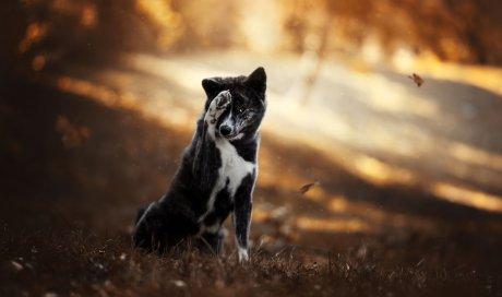 Photographe professionnelle pour shooting chien à Lyon