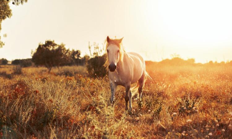 Shooting cheval à Lyon