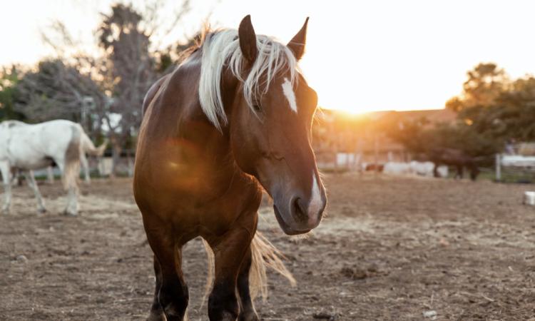 Shooting photo cheval à Lyon