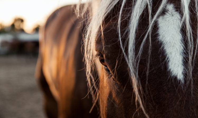 Shooting cheval région lyonnaise
