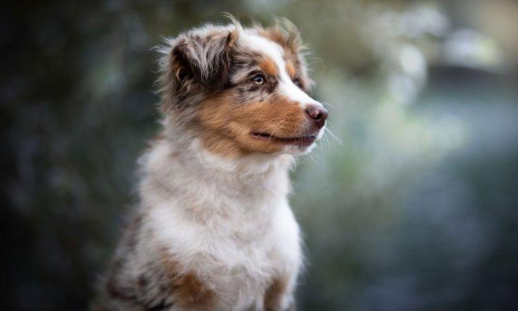 Photo de chien région lyonnaise