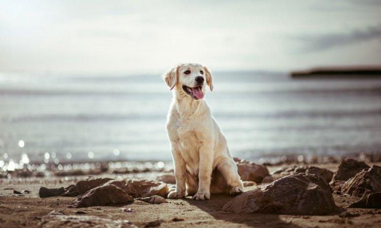 Photo de chien à Lyon