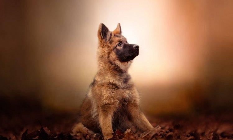 Photoshoot canin à Lyon