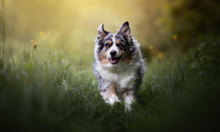 Shoot canin à Lyon