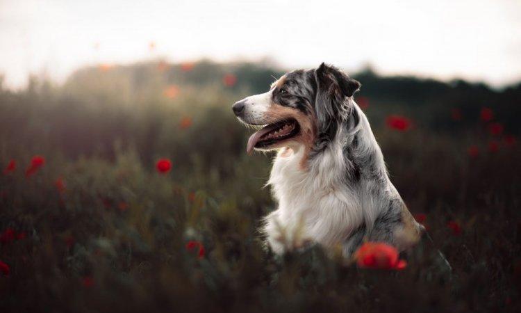 Séance photo de chien à Lyon