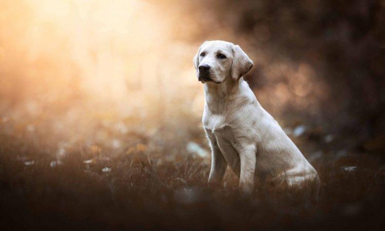 Shooting photo professionnel pour chien à l'automne à Lyon